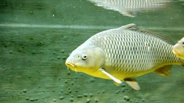 Les poissons de lac et de rivière