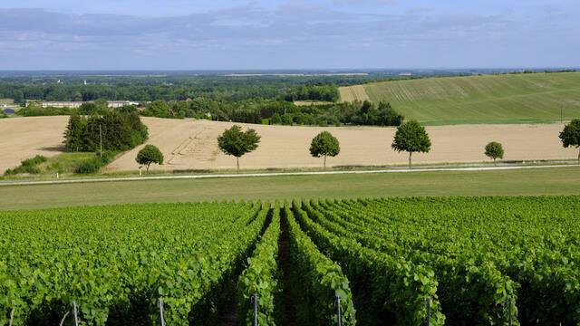 La Route du Champagne des Coteaux Vitryats - Deutsch