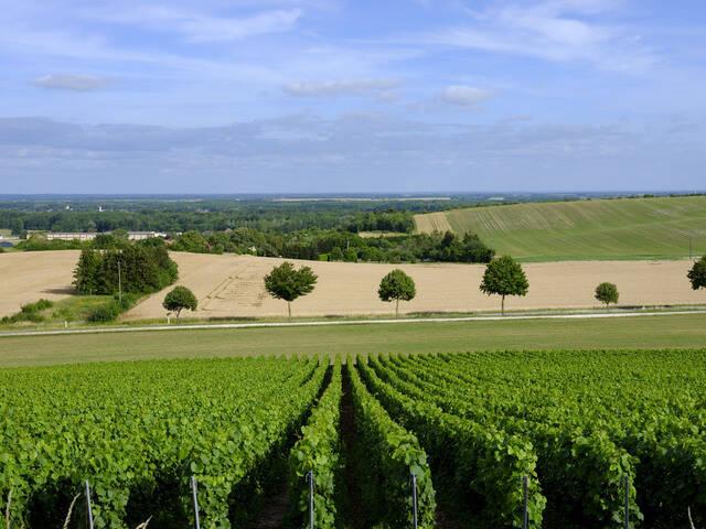 La Route du Champagne des Coteaux Vitryats