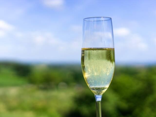 Nos producteurs de Champagne